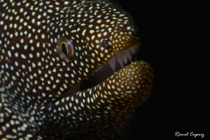 Moray smile by Raoul Caprez 